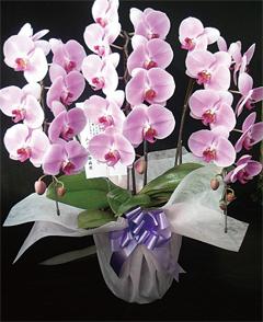 写真提供:日本蘭科植物園
