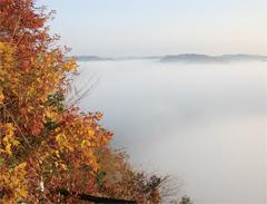 鎌倉山の大展望台から見た雲海に煙る紅葉