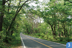 那須街道赤松林