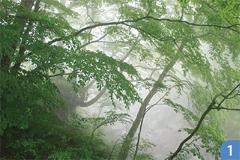 イヌブナ自然林