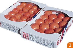 水耕トマト栽培