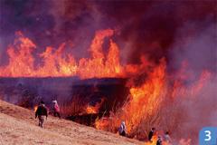 渡良瀬遊水地のヨシ焼き